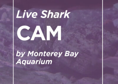 Live Shark Cam